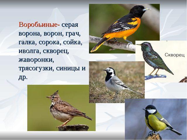 Воробьиные- серая ворона, ворон, грач, галка, сорока, сойка, иволга, скворец...