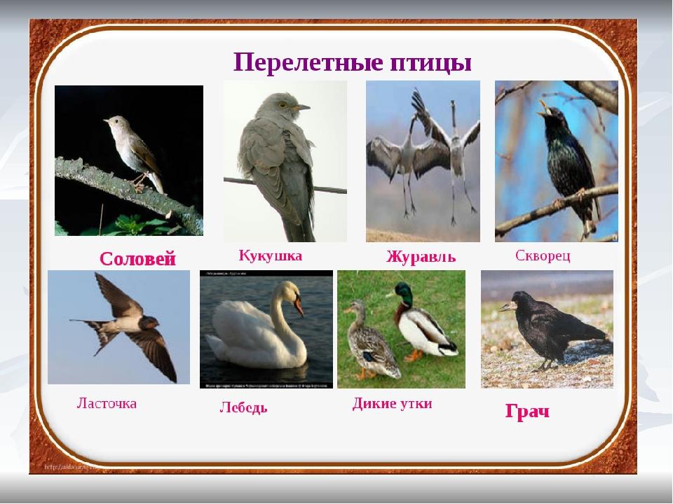 новых перелетные птицы казахстана с картинками рационе стояли