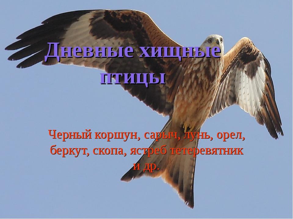 Дневные хищные птицы Черный коршун, сарыч, лунь, орел, беркут, скопа, ястреб...
