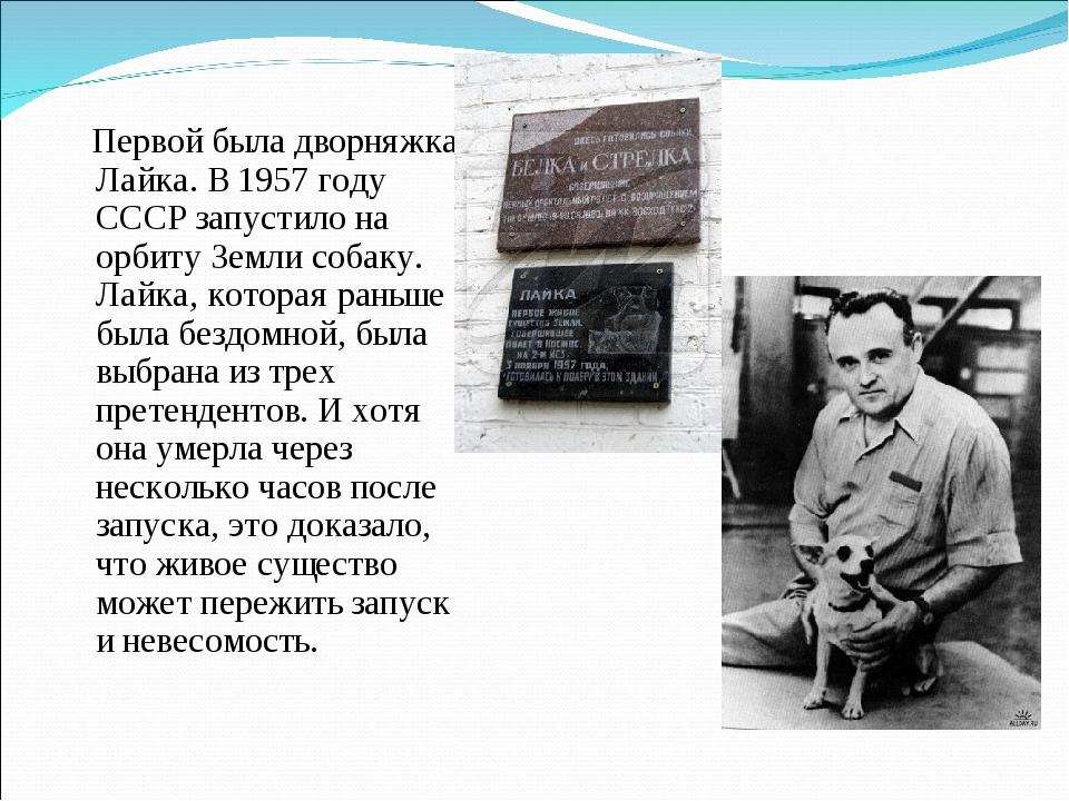 Первой была дворняжка Лайка. В 1957 году СССР запустило на орбиту Земли соба...