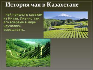 История чая в Казахстане Чай пришел к казахам из Китая. Именно там его впервы