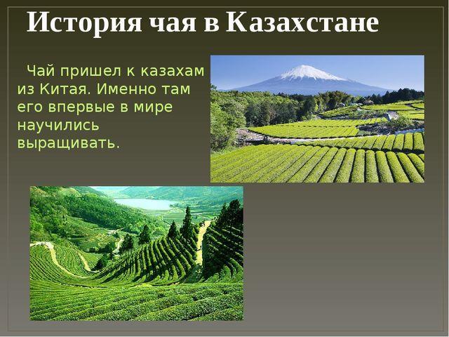 История чая в Казахстане Чай пришел к казахам из Китая. Именно там его впервы...