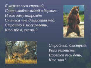 Я хозяин леса строгий,  Спать люблю зимой в берлоге.