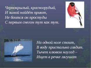 Чернокрылый, красногрудый,  И зимой найдёт приют