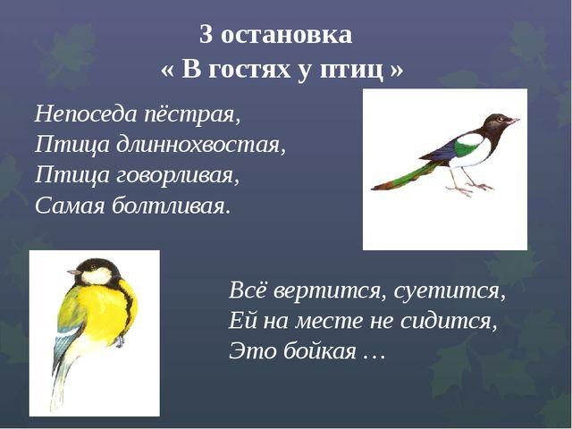 3 остановка « В гостях у птиц » Непоседа пёстрая, ...