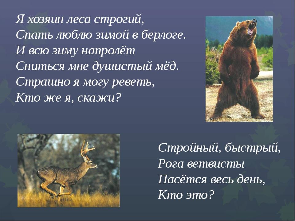 Я хозяин леса строгий,  Спать люблю зимой в берлоге....