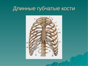 Длинные губчатые кости