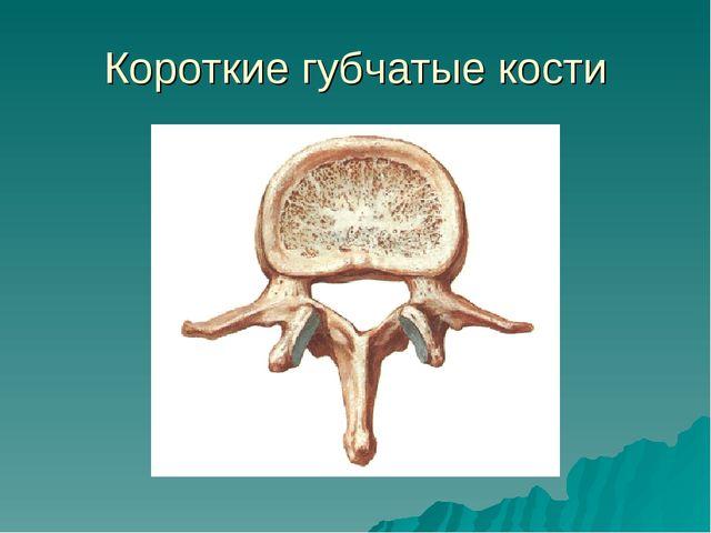 Короткие губчатые кости
