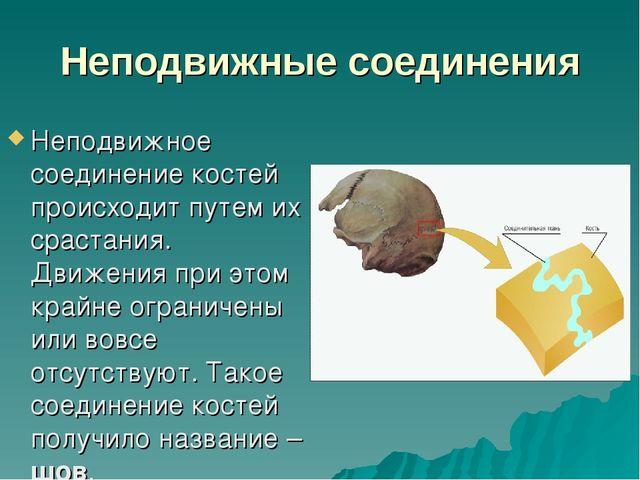 Неподвижные соединения Неподвижное соединение костей происходит путем их срас...