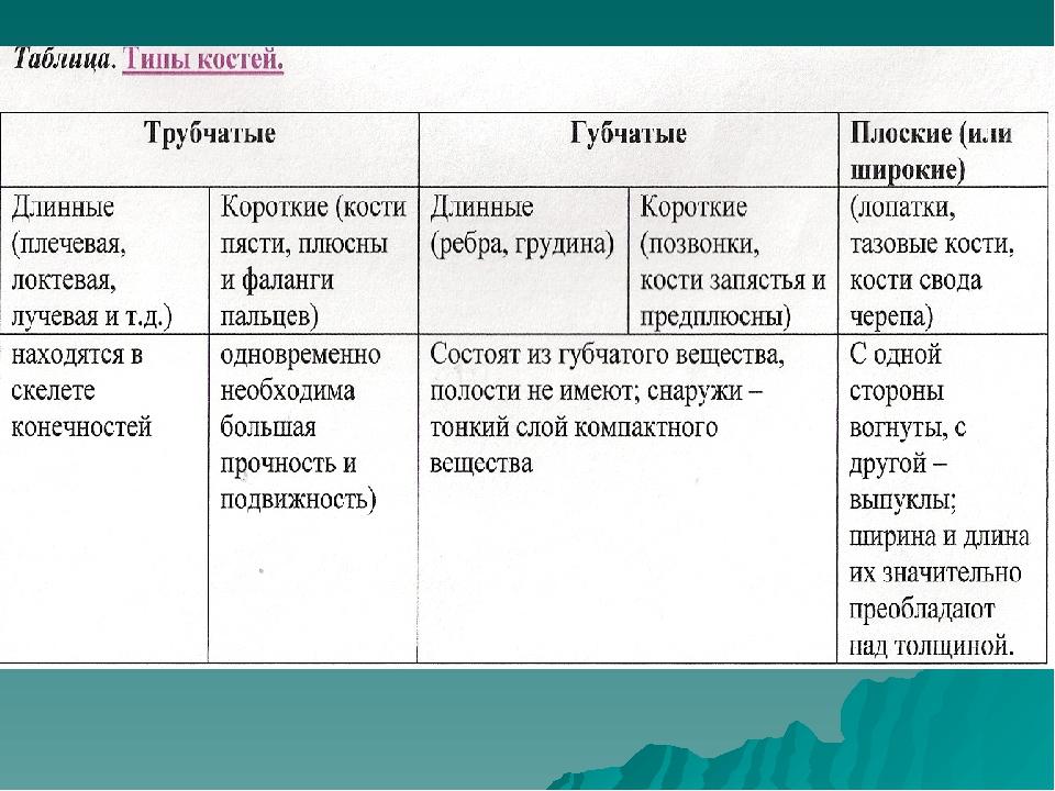 Таблица. Типы костей.