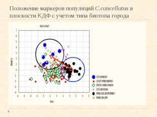 Положение маркеров популяций С.cancellatus в плоскости КДФ с учетом типа биот