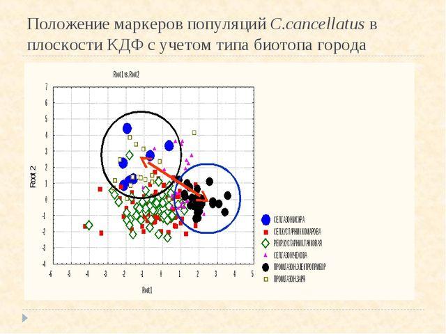 Положение маркеров популяций С.cancellatus в плоскости КДФ с учетом типа биот...