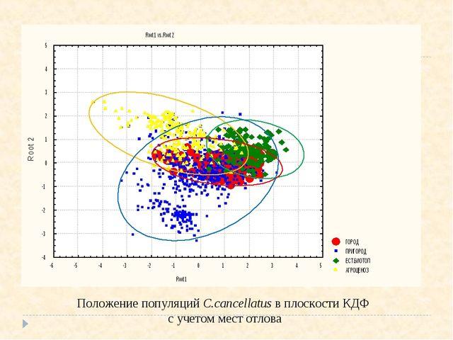 Положение популяций С.cancellatus в плоскости КДФ с учетом мест отлова