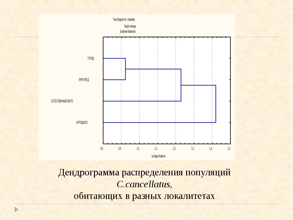 Дендрограмма распределения популяций С.cancellatus, обитающих в разных локали...