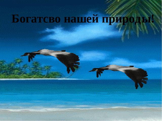 Богатсво нашей природы!