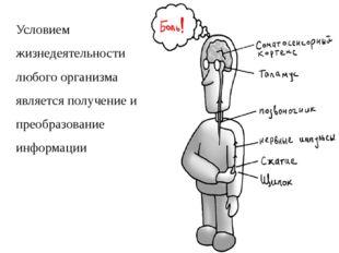 Условием жизнедеятельности любого организма является получение и преобразован