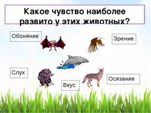 Какое чувство наиболее развито у этих животных? Зрение Обоняние Слух Осязание