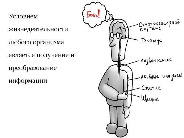 Условием жизнедеятельности любого организма является получение и преобразован...