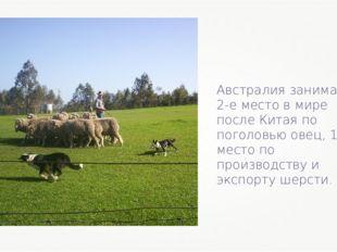 Австралия занимает 2-е место в мире после Китая по поголовью овец, 1-е место