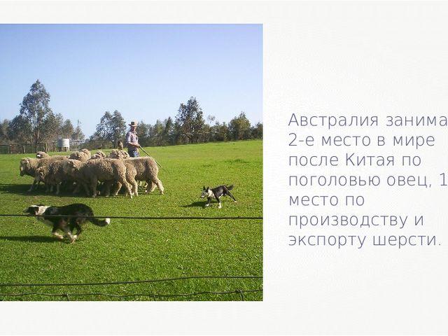 Австралия занимает 2-е место в мире после Китая по поголовью овец, 1-е место...