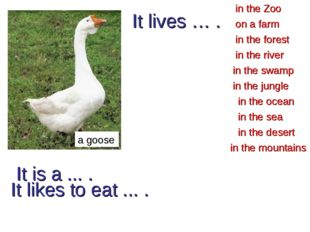 It is a ... . a goose in the forest in the Zoo in the river in the desert in