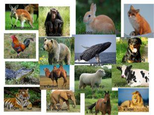 a kangaroo a fox a rabbit a bear a monkey a crocodile a cockerel a camel a wh