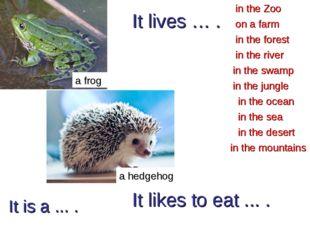 It is a ... . a frog in the forest in the Zoo in the river in the desert in t