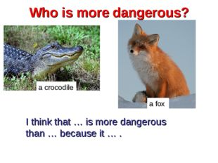 Who is more dangerous? a crocodile a fox I think that … is more dangerous tha