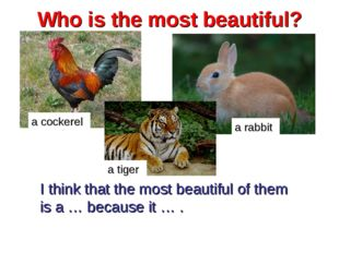 Who is the most beautiful? a cockerel a rabbit I think that the most beautifu