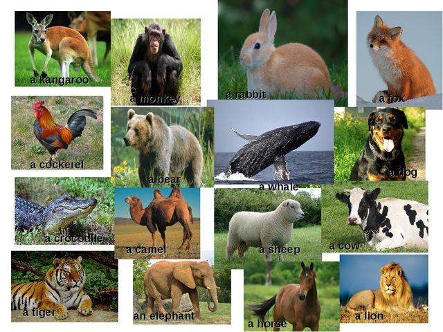 a kangaroo a fox a rabbit a bear a monkey a crocodile a cockerel a camel a wh...