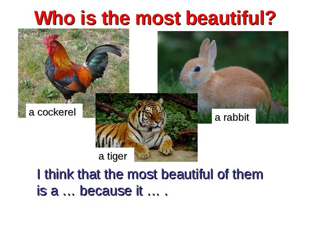 Who is the most beautiful? a cockerel a rabbit I think that the most beautifu...