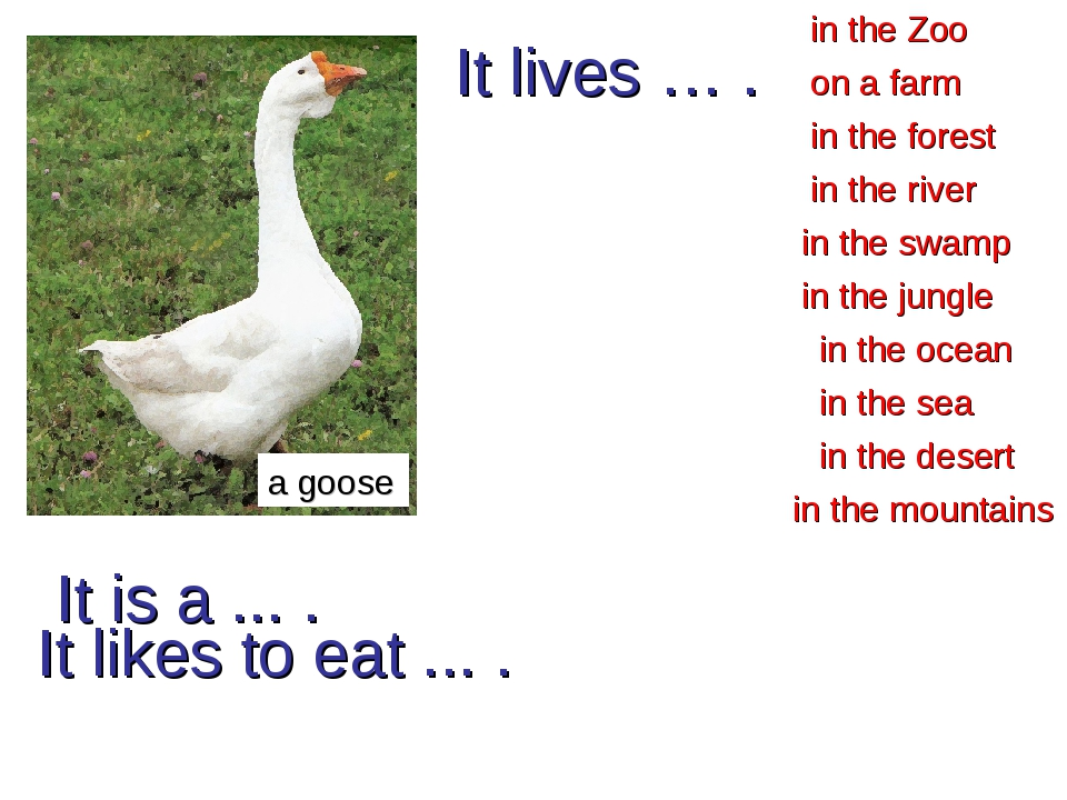 It is a ... . a goose in the forest in the Zoo in the river in the desert in...