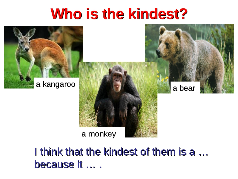 Who is the kindest? a kangaroo a bear a monkey I think that the kindest of th...