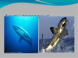 Акулы,подводные хищники.