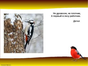 Не дровосек, не плотник, А первый в лесу работник. Дятел FokinaLida.75@mail.ru