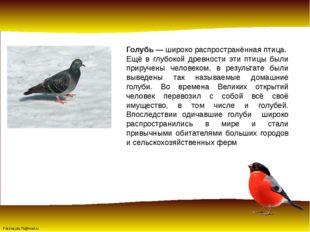 Голубь— широко распространённая птица. Ещё в глубокой древности эти птицы бы