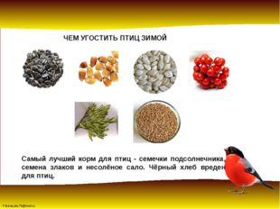 ЧЕМ УГОСТИТЬ ПТИЦ ЗИМОЙ Самый лучший корм для птиц - семечки подсолнечника, с