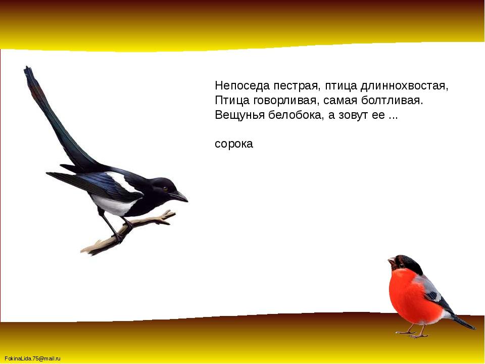 Непоседа пестрая, птица длиннохвостая, Птица говорливая, самая болтливая. Вещ...