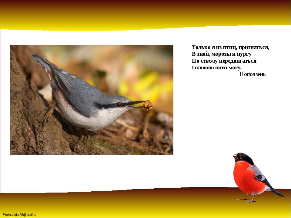 Только я из птиц, признаться, В зной, морозы и пургу По стволу передвигаться...