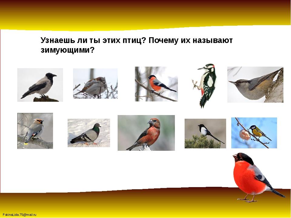 Узнаешь ли ты этих птиц? Почему их называют зимующими? FokinaLida.75@mail.ru