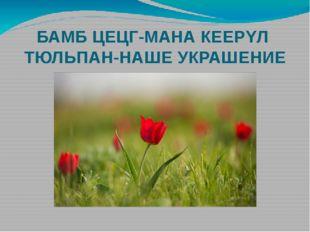БАМБ ЦЕЦГ-МАНА КЕЕРΥЛ ТЮЛЬПАН-НАШЕ УКРАШЕНИЕ