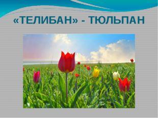 «ТЕЛИБАН» - ТЮЛЬПАН
