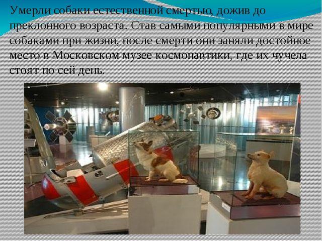 Умерли собаки естественной смертью, дожив до преклонного возраста. Став самым...