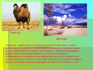 Верблюд. эфемеры Пустыня – группа биомов, распространённых в областях с крайн