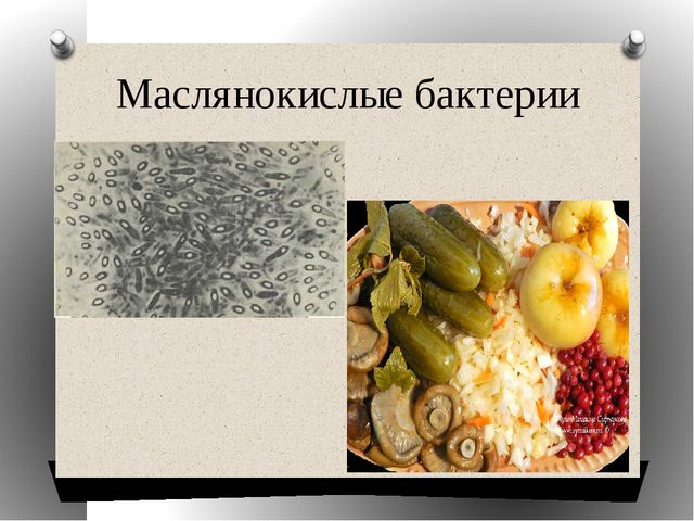 Маслянокислые бактерии