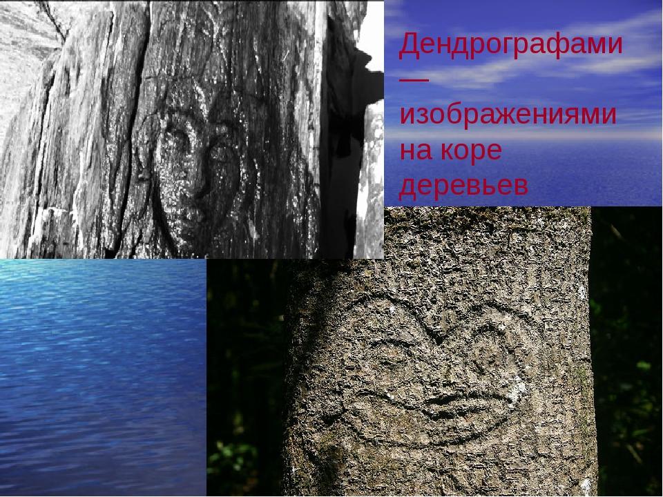 Дендрографами — изображениями на коре деревьев