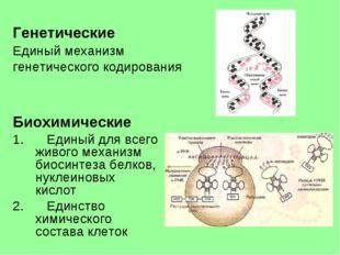Генетические Единый механизм генетического кодирования Биохимические Единый