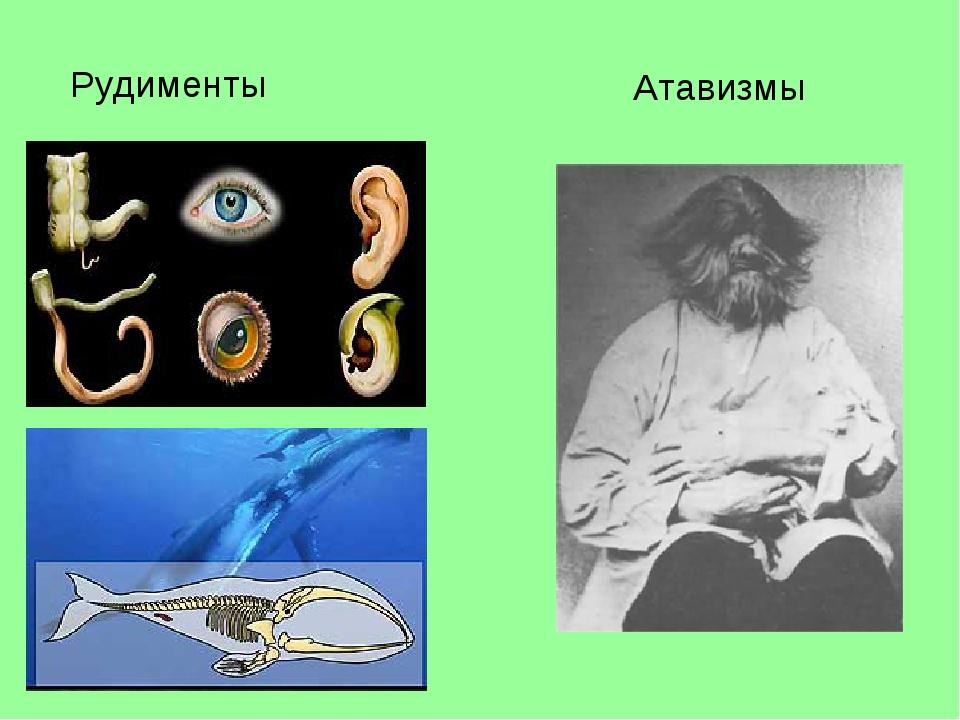 Рудименты Атавизмы