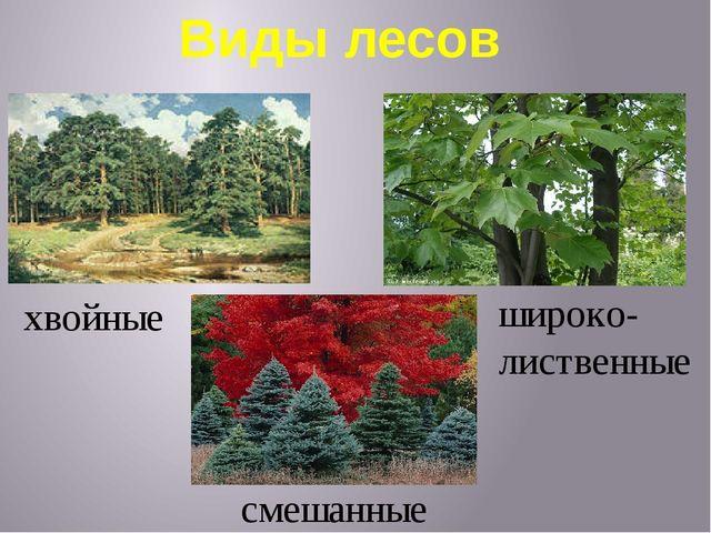 Виды лесов хвойные широко- лиственные смешанные