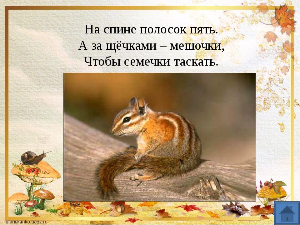 «В Муми-Дол приходит осень»